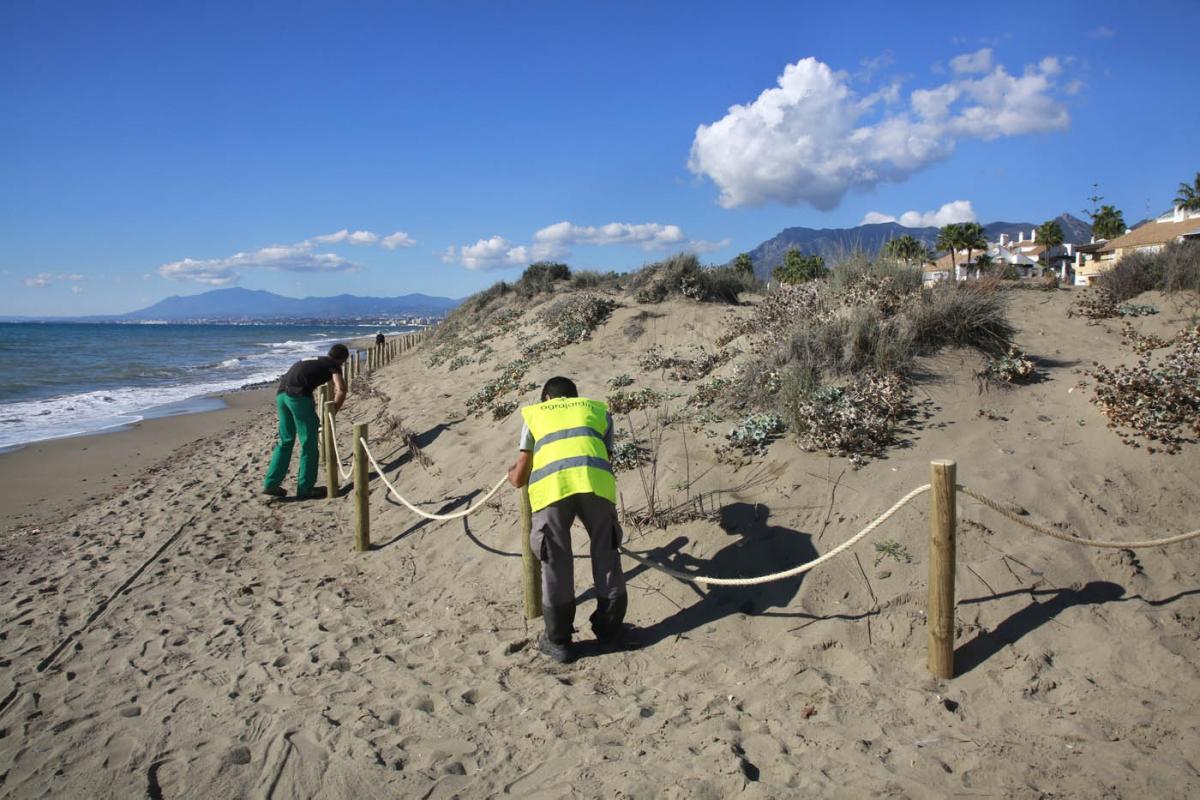 El Ayuntamiento comienza una actuación para la erradicación de especies invasoras en las Dunas de Marbella